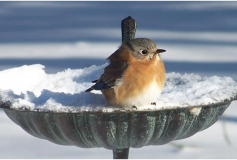 Protecting our Feathered Friends all Year Round – How to help Garden Birds in the Winter