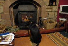 The Lowdown on Pet Friendly Flooring