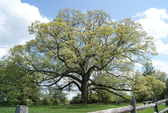 Why Building with Oak Helps Reduce Your Carbon Footprint