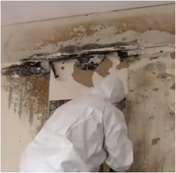 How to remove mildew and mould from your walls