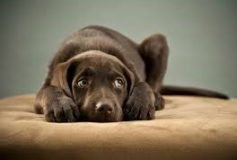 How to help your dog prepare for their kennel stay