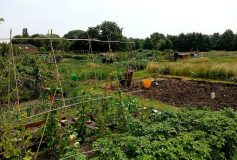Five reasons why allotments are still relevant