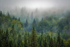 What's the difference between trees?