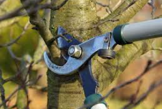 Why Do Trees Need Pruning?