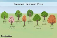 Is it hardwood or softwood?